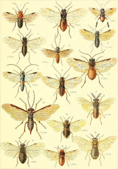 Die_insekten_Mitteleuropas_insbesondere_Deutschlands_(1914-(26))_(20935587561)